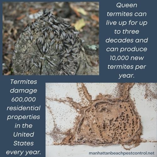 termite-exterminator-Manhattan-Beach-90266